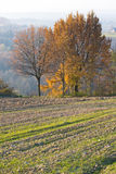 Landscape with autumn trees Stock Photo