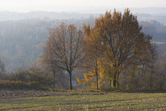 Landscape with autumn trees Stock Image