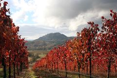 Landscape of Autumn Vineyard Stock Image