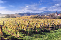 Landscape with autumn vineyards. France, Alsace Stock Photo