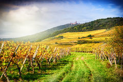 Landscape with autumn vineyards. France, Alsace Stock Photos