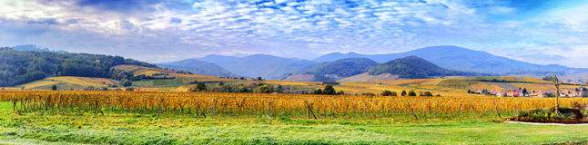 Landscape with autumn vineyards of wine route. France, Alsace Royalty Free Stock Photography