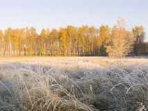 Landscape with an autumn wood in the first frosty morning Stock Image