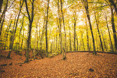 Landscape of autumnal forest Stock Photography