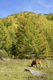 Autumnal mountain forest Royalty Free Stock Photo