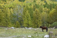 Autumnal mountain forest Stock Image