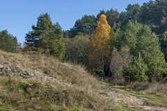 Landscape of autumnal nature with  mix forest  and dry glade in Balkan mountain Royalty Free Stock Photo