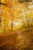 Landscape of autumnal park. Stock Photography