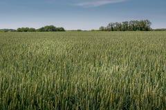 Landscape of Auvers-sur-Oise fields. Landscape of Auvers-sur-oise, France, where the painter Vincent Van Gogh lived his last days royalty free stock photography