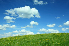 Landscape background with buttercup meadow and cloudy sky Stock Image