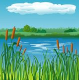Landscape background with river. And reeds Stock Photo