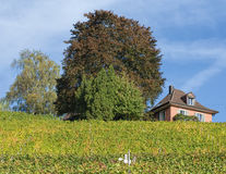 Landscape in Baden, Switzerland. Baden, Switzerland - 19 October, 2014: vineyard and house. Baden is a municipality in the Swiss canton of Aargau, its name stock image