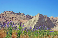 Badlands and Wooly Verbena flowers Royalty Free Stock Photography
