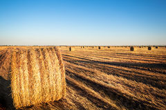 Landscape with bales of straw Stock Photos