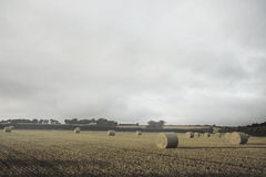 Landscape with bales of straw. Kind of amazing Landscape with bales of straw Stock Images