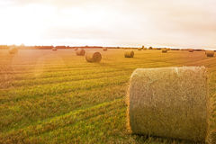 Landscape with bales of straw. Kind of amazing Landscape with bales of straw Royalty Free Stock Photo
