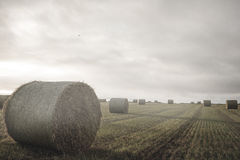 Landscape with bales of straw. Kind of amazing Landscape with bales of straw Royalty Free Stock Photos