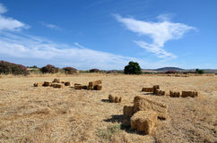 Landscape with bales of straw and oleander Royalty Free Stock Photo