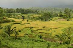 Landscape of bali, indonesia Royalty Free Stock Images