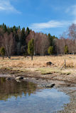 Landscape at the Baltic Sea. In Sweden in early spring Royalty Free Stock Photos