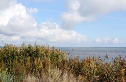 Landscape of Baltic seaside in an autumn day. Estonia, Saaremaa island, sunlight Stock Images