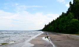 Landscape of Baltic seaside, Latvia Royalty Free Stock Photography