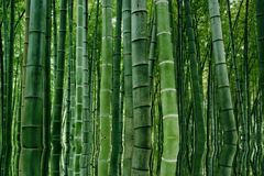 Landscape of Bamboo forest in Sichuan Bamboo Sea Royalty Free Stock Image