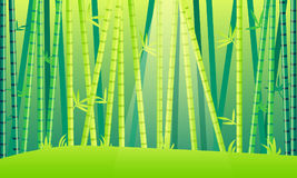 Landscape Bamboo forest Royalty Free Stock Image