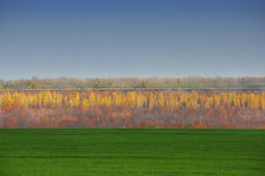 Landscape - band field with green grass,  autumn forest and blue sky. Royalty Free Stock Photo