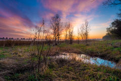 Landscape of Bare Plant Near Water and Dry Grasses Royalty Free Stock Photo
