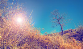 Landscape with bare tree and sun shining through dry bushes Royalty Free Stock Image