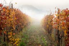 Landscape of Barolo wine region stock photo