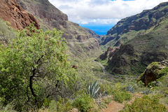 Landscape in Barranco de Guayadeque Royalty Free Stock Image