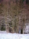 Winter landscape with deciduous trees Stock Photography