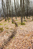 Landscape with barren trees and dead leaves Royalty Free Stock Photos