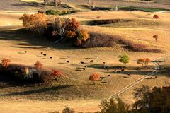 Landscape of Bashang Grasslands royalty free stock photos