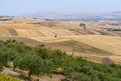 Landscape in Basilicata (Italy). Near Melfi at summer Royalty Free Stock Images