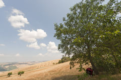 Landscape in Basilicata (Italy) with bicycle Royalty Free Stock Image