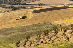 Landscape in Basilicata (Italy) at summer. Landscape in Basilicata (Italy) near Melfi at summer stock images