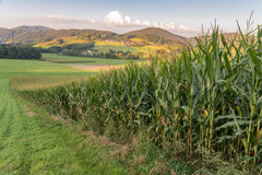 Landscape of bavarian forest with meadow and corn field.  royalty free stock photography