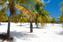 Landscape of the beach in the Caribbean Sea Stock Photo