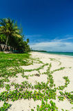 Landscape of beach Royalty Free Stock Photography