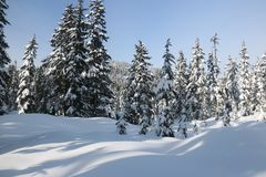 Canadian winter long path snow admire landscapes. Landscape with beautiful big snowy firs trees, snow. Hiking in the national park reflexion with nature admire Royalty Free Stock Image