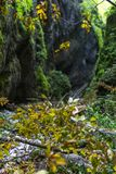 Canyon with a river. Landscape with a beautiful canyon covered in moss and a river flowing through Royalty Free Stock Image
