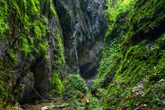 Canyon with a river. Landscape with a beautiful canyon covered in moss and a river flowing through Stock Photography
