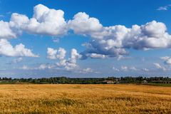 Landscape with beautiful clouds in the blue sky and ripe ears in the field. Landscape with beautiful white clouds in the blue sky and ripe golden ears in the royalty free stock photography