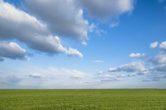 Landscape of beautiful corn field and blue sky with some clouds in grandangle view.  Stock Image