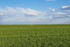 Landscape of beautiful corn field and blue sky with some clouds in grandangle view.  Stock Images