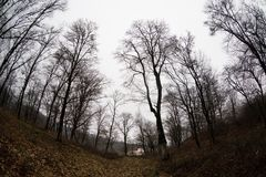 Landscape with beautiful fog in forest on hill or Trail through a mysterious winter forest with autumn leaves on the ground. Road. Through a winter forest royalty free stock images
