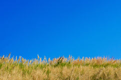 Landscape, beautiful grass hills and blue sky in spring Royalty Free Stock Image